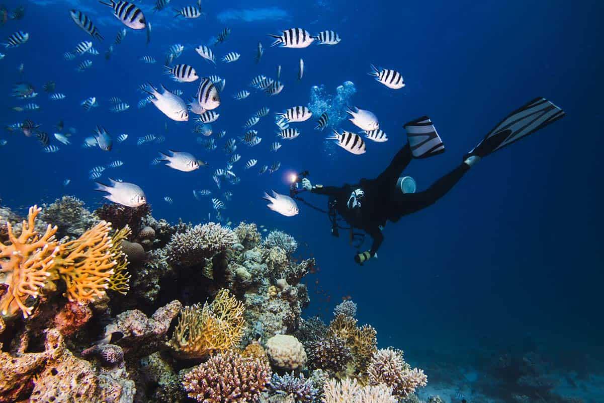 torcia da sub acque profonde