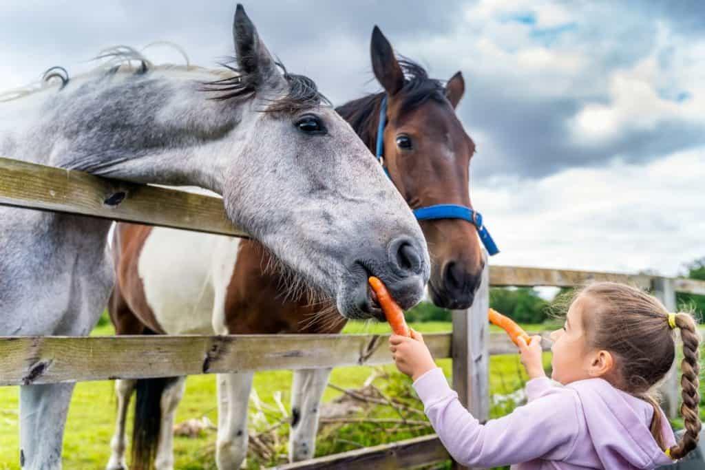 Cosa Regalare ad un Appassionato di Cavalli : 14 Idee Regalo!
