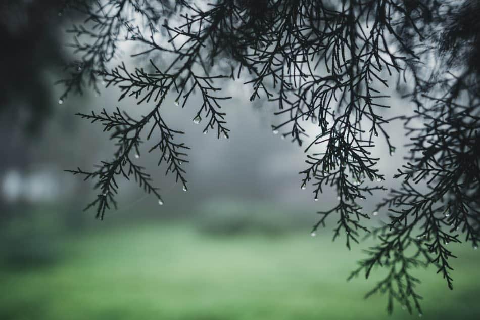 pioggia in montagna