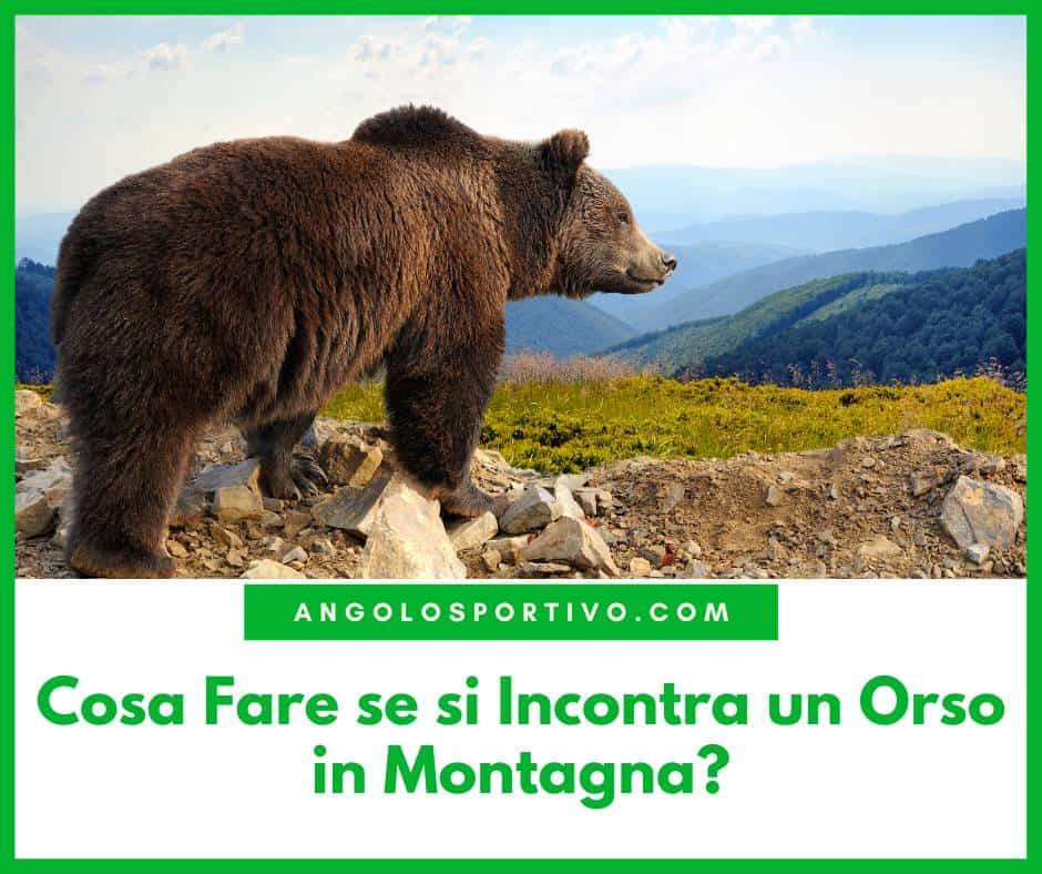 Cosa Fare se si Incontra un Orso in Montagna
